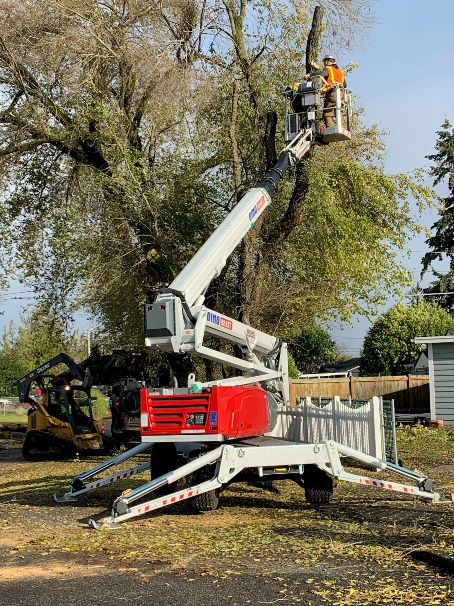 Tight Area Removal Tree Tight Quarters